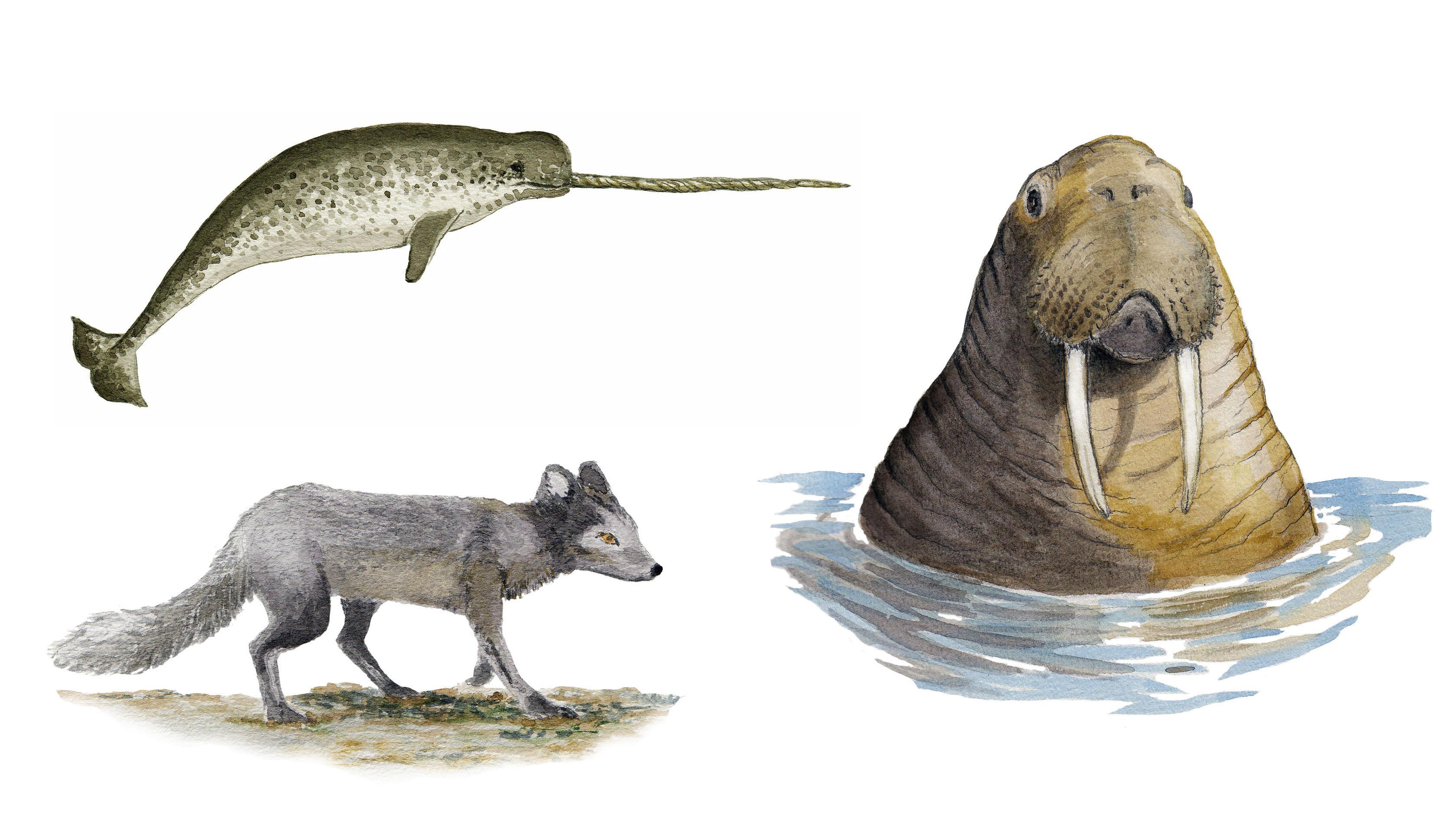 Grönlandsdjur, Grönlannineläimiä